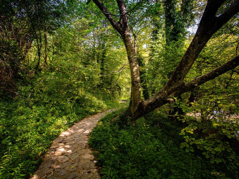 Φύση, Πάϊκο